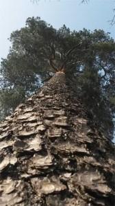 Baumfaellungen Karlsruhe Baumpflege Henken