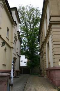 Baumpflege Karlsruhe