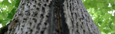 Blitzrinnen Baumpflege Karlsruhe