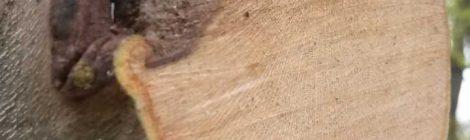 Baumpflege Karlsruhe warum Bäume schneiden