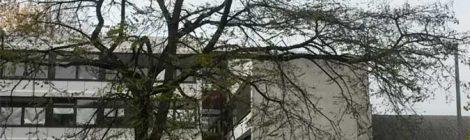 Baumpflege einer Robinie 12m