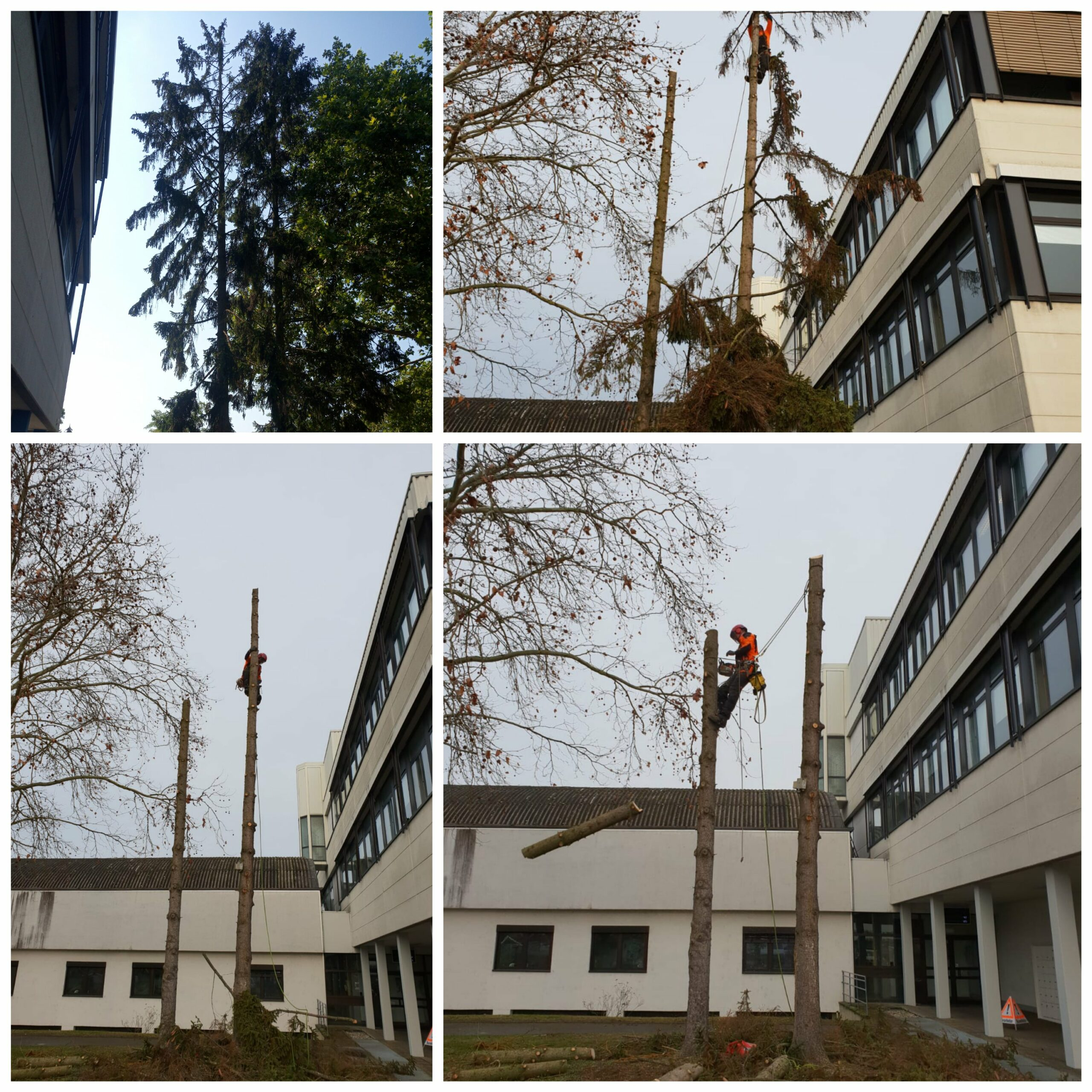 Baumpflege Baumfällung Karlsruhe Ettlingen